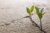 Chwast rośnie — Zdjęcie stockowe
