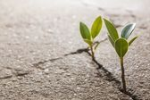 Ervas daninhas crescendo — Foto Stock