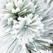 Small pine tree covered with snow - Stock Photo