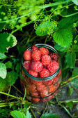 Raspberries in a glass jar — Stock Photo