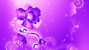 Purple orchids. — Stock Video