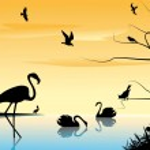 Постер, плакат: Birds