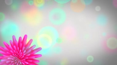 Flowers opening- colorful video background. — Stok video