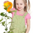 Little girl watering the plant — Stock Photo