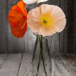 Bouquet of colorful poppies on wooden table — Stock Photo
