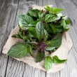 Fresh basil leaves — Stock Photo #27883511