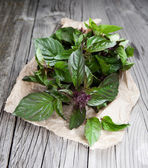 Fresh basil leaves — Foto Stock