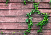 Wall with climber — Stock Photo