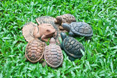 A pottery of frog on lotus leaf and turtles — Stock Photo