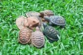 Eine keramik frosch auf lotusblatt und schildkröten — Stockfoto