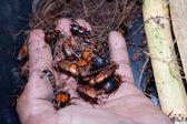 De nyfödda larverna på hand — Stockfoto