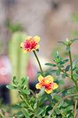 Pigweed flower — Stock Photo