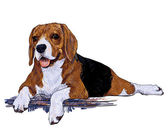 The resting time of beagle — Stock Vector