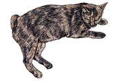 Thai cat laying — Stock Vector