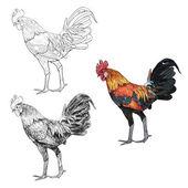 Peleas de gallo — Vector de stock