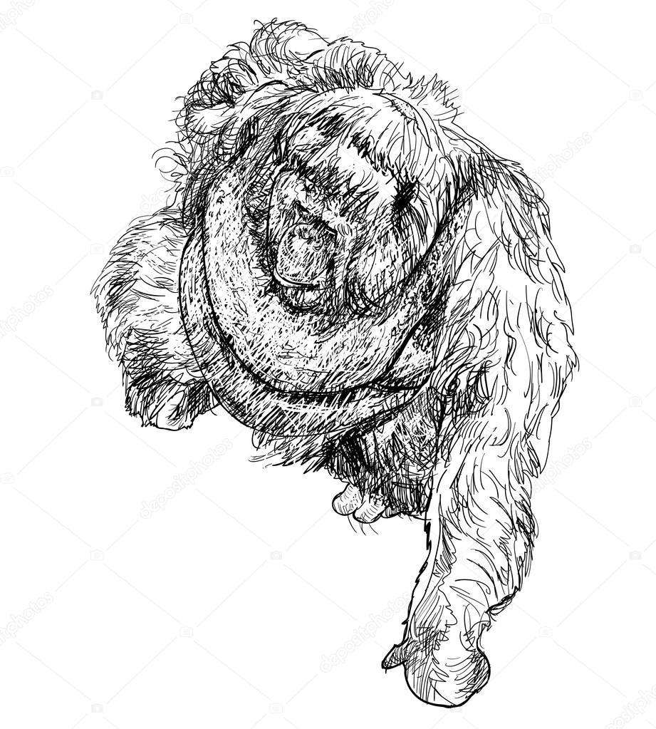 红毛猩猩 — 图库矢量图像08