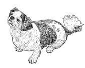 実はシーズー犬のベクトル — ストックベクタ