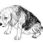 Постер, плакат: Fat beagle