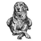 Thailändska rasen hund — Stockvektor