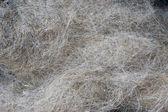 Dog's fallen hair — Stock Photo