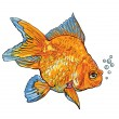 goldfish — Stock Vector