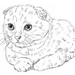 Scottish Fold cat — Stock Vector