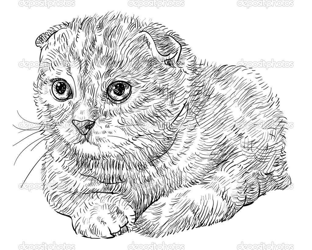 Раскраски шотландских вислоухих котят