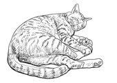 Sleeping cute cat — Vetor de Stock