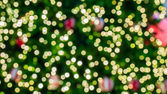 Blur background from christmas tree — Stock Photo