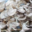 Cultivate of oyster mushroom — Foto Stock #37159743