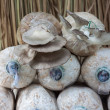 Stockfoto: Cultivate of oyster mushroom