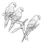 Three parrots — Stock Vector