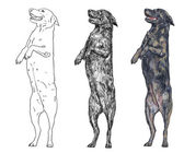 Standing dog — Stock Vector