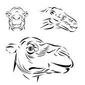 Line art of camel head — Stock Vector