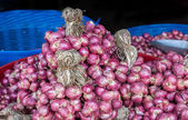 Bind of red onion  — Stock Photo