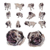 Drawing set of pug — Stok Vektör