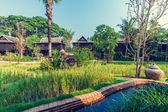 Green rice field in the villa,Thailand — Foto de Stock