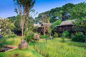 Green rice field in the villa,Thailand — Stock Photo