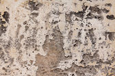 Texture cement wall background — Stock Photo