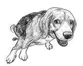 Pooping beagle — Stock Vector