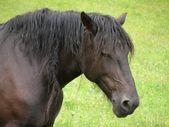 Horse at misurina lake — Stock Photo