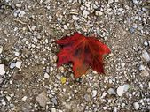 Red leaf — Photo