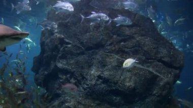 акула под водой — Стоковое видео