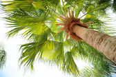Palm Tree View from Below — Stock Photo