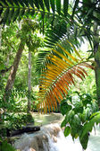 Tropical Rainforest in Jamaica — Stock Photo