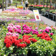 Foto Stock: Flower Nursery