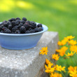 Stock Photo: Bowl of Blackberries in Darden