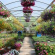 Foto de Stock  : Greenhouse With Flowers