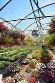 Plantes en serre — Photo