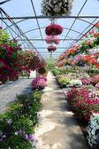 Skleník s květy — Stock fotografie